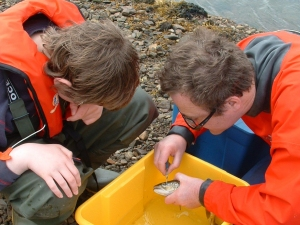 Tagging a sea trout