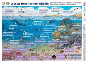 Of features shown on this poster, only maerl beds and flameshell beds will get additional protection