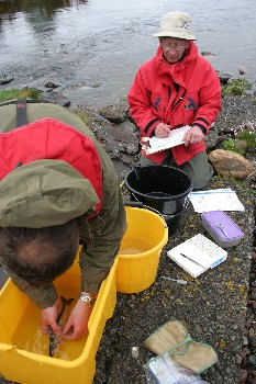 Counting sea lice at Poolewe