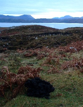 Mole hills by Mellon Udrigle in December 2007. Are moles and earthworms still present here?